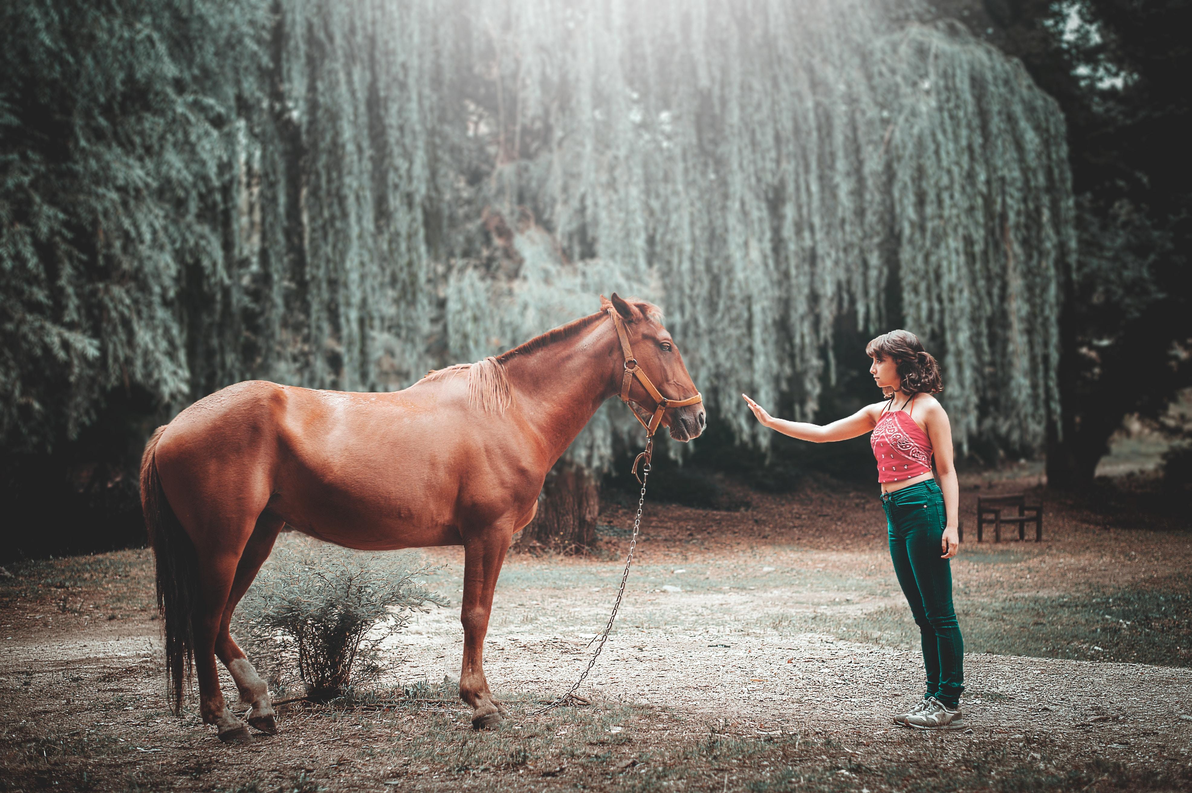 Equine Studies 12 Summer Opportunity